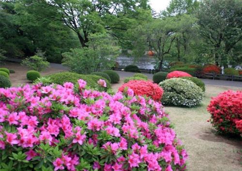 园林景观知识_外国园林植物配置
